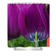 Inside Tulip Shower Curtain