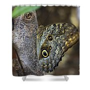 Instant Butterfly Shower Curtain