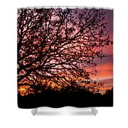 Intense Sunset Tree Silhouette Shower Curtain