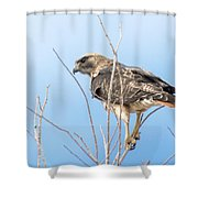 Intensity Shower Curtain