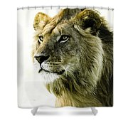 Intensity Shower Curtain