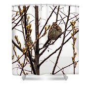Intent Look Shower Curtain