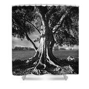 Intercoastal Pine Shower Curtain