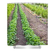Intercropped Trees And Beans Shower Curtain
