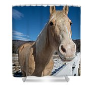 Interested Shower Curtain