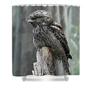 Interesting Tawny Frogmouth Perched On A Tree Stump Shower Curtain