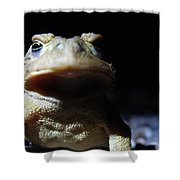 Interrogation Of A Toad Shower Curtain