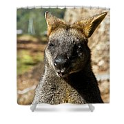 Interview With A Swamp Wallaby Shower Curtain