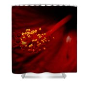 Intimate Hibiscus Shower Curtain