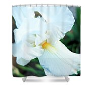 Intimate Iris Shower Curtain
