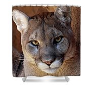 Into His Eyes Shower Curtain