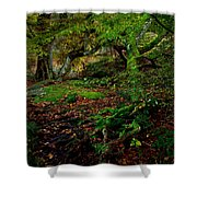Into The Forest Of Fontainebleau Shower Curtain