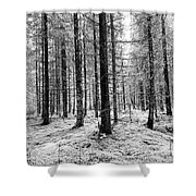 Into The Monochrome Woods Shower Curtain