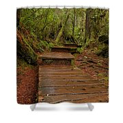 Into The Rainforest Shower Curtain