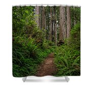 Into The Redwoods Shower Curtain