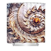 Into The Spiral Shower Curtain
