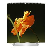 Into The Sunlight Shower Curtain