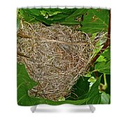 Intricate Nest Shower Curtain