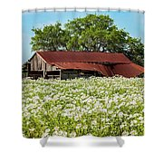 Poppy Invasion In Hillcountry-texas Shower Curtain