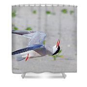 Inverted Flight Shower Curtain