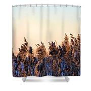 Iowa Cane Shower Curtain