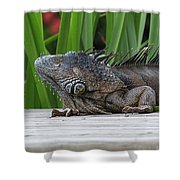 Iquana Shower Curtain