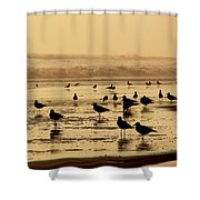 Iquique Chile Seagulls  Shower Curtain