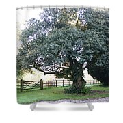 Ireland Tree Shower Curtain