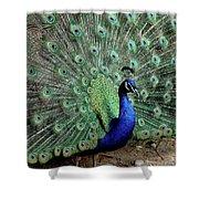 Iridescent Blue-green Peacock Shower Curtain