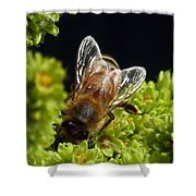 Iridescent Wings Shower Curtain