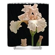 Iris 2 Shower Curtain