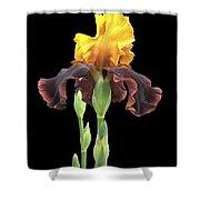 Iris 3 Shower Curtain