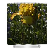 Iris 6 Shower Curtain