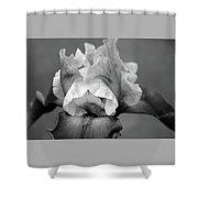 Iris 6622 H_4 Shower Curtain