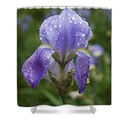 Iris After Rain Shower Curtain