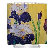 Iris Afternoon Delight Shower Curtain
