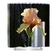 Iris Along The Fence 6731 H_2 Shower Curtain
