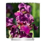 Iris And Moth Shower Curtain