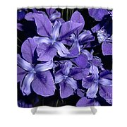 Iris At Night Shower Curtain
