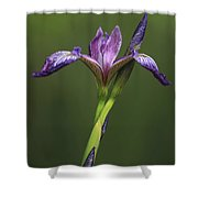 Iris At The Manor Shower Curtain