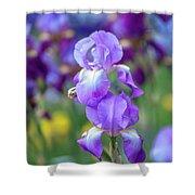 Ballet Girl. The Beauty Of Irises Shower Curtain