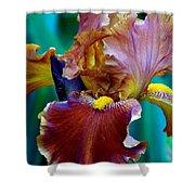 Iris Beauty Photograph Shower Curtain
