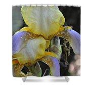 Iris Beauty Shower Curtain