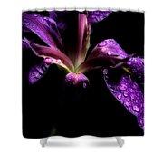 Iris Bloom Shower Curtain
