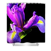 Iris Bloom One Shower Curtain