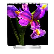 Iris Bloom Two Shower Curtain