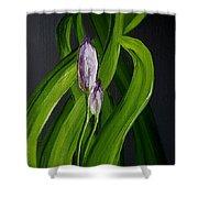 Iris Buds  49 Shower Curtain