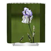 Iris Buds To Flower Shower Curtain