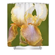 Iris Canary Frills Shower Curtain