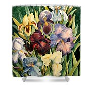 Iris Collection Shower Curtain